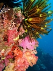 Agincourt-Reef;Agincourt-Reefs;Australasian;Australia;Australian;Barrier-Reef;coral-reef;coral-reefs;Coral-Sea;crinoids;dive-site;dive-sites;diving;ecosystem;environment;Feather-Star;Feather-Stars;Great-Barrier-Reef;Great-Barrier-Reef-Marine-Park;marine;marine-environment;marine-life;marinelife;North-Queensland;Ocean;oceanlife;Oceans;Qld;Queensland;reef;reefs;ribbon-reef;ribbon-reefs;ribbonreef;ribbonreefs;scuba-diving;Sea;sealife;Seas;South-Pacific;Tasman-Sea;Tropcial-North-Queensland;tropical-reef;tropical-reefs;under-water;under_water;undersea;underwater;underwater-photo;underwater-photography;underwater-photos;UNESCO-World-Heritage-Site;Wiorld-Heritage-Site;World-Heritage-Area;World-Heritage-Park