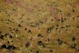 Adansonia-gregorii;aerial;aerial-photo;aerial-photograph;aerial-photographs;aerial-photography;aerial-photos;aerial-view;aerial-views;aerials;arid;Australasia;Australasian;Australia;Australian;Australian-baobab;Australian-Outback;back-country;backcountry;backwoods;baobab-tree;baobab-trees;boab-tree;boab-trees;bottle-tree;bottle-trees;country;countryside;cream-of-tartar-tree;East-Kimberley;gadawon;geographic;geography;gourd_gourd-tree;grass;grass-plains;grassland;Kimberley;Kimberley-Region;Outback;Purnululu-Conservation-Reserve;remote;remoteness;rural;The-Kimberley;tree;trees;Turkey-Creek;W.A.;WA;Warmun;West-Australia;Western-Australia;wilderness