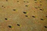 aerial;aerial-photo;aerial-photograph;aerial-photographs;aerial-photography;aerial-photos;aerial-view;aerial-views;aerials;arid;Australasia;Australasian;Australia;Australian;Australian-Outback;back-country;backcountry;backwoods;country;countryside;East-Kimberley;geographic;geography;grass-plains;Kimberley;Kimberley-Region;Outback;plain;Purnululu-Conservation-Reserve;remote;remoteness;rural;The-Kimberley;tree;trees;Turkey-Creek;W.A.;WA;Warmun;West-Australia;Western-Australia;wilderness