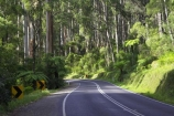 australasia;Australia;australian;bend;bends;bush;centre-line;centre-lines;centre_line;centre_lines;centreline;centrelines;corner;corners;Dandenong-Ranges;dandenongs;driving;eucalypt;eucalypts;eucalyptus-trees;forest;forests;gum-trees;highway;highways;Melbourne;native-bush;native-trees;open-road;open-roads;road;road-trip;roads;straight;transport;transportation;travel;traveling;travelling;tree;trees;trip;Victoria