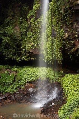 Australasian;Australia;Australian;cascade;cascades;Central-Eastern-Rainforest-Reserves;creek;creeks;Crystal-Falls;Crystal-Shower-falls;Dorrigo-N.P.;Dorrigo-National-Park;Dorrigo-NP;Dorrigo-Rainforest;falls;forest;forests;Gondwana-Rainforests-of-Australia;green;lush;Mid-North-Coast;Mid-North-Coast-NSW;Mid-North-Nsw;Mid-Northern-NSW;N.S.W.;natural;nature;New-South-Wales;NSW;overhang;rainforest;rainforests;scene;scenic;stream;streams;verdant;water;water-fall;water-falls;waterfall;Waterfall-Way;waterfalls;wet;Wonga-Walk;World-Heritage-Site