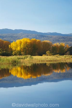 Alpine-Way;Australia;autuminal;autumn;autumn-colour;autumn-colours;autumnal;calm;color;colors;colour;colours;dam;dams;deciduous;fall;Khancoban;Khancoban-Dam;Khancoban-Pondage;Khancoban-Reservoir;lake;lakes;leaf;leaves;N.S.W.;New-South-Wales;NSW;placid;pondage;quiet;reflection;reflections;reservoir;reservoirs;season;seasonal;seasons;serene;smooth;Snowy-Mountains;Snowy-Mountains-Drive;Snowy-Mountains-Hydro_Electric-Scheme;Snowy-Mountains-Scheme;South-New-South-Wales;Southern-New-South-Wales;still;tranquil;tree;trees;water