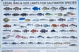 Australasia;Australia;Batemans-Bay;Clyde-River;fish-guide;fish-identification-chart;Fishing-Guide;fishing-rules;identification-charts;N.S.W.;New-South-Wales;NSW;rules-and-regulations;sign-signs;South-New-South-Wales;Southern-New-South-Wales