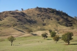 agricultural;agriculture;australasia;Australasian;Australia;australian;Brungle;country;countryside;cow;cows;crop;crops;farm;farming;farmland;farms;field;fields;Gundagai-_-Tumut-Rd;Gundagai-_-Tumut-Road;horticulture;meadow;meadows;N.S.W.;New-South-Wales;NSW;paddock;paddocks;pasture;pastures;rural;South-New-South-Wales;Southern-New-South-Wales