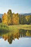 Alpine-Way;Australia;autuminal;autumn;autumn-colour;autumn-colours;autumnal;calm;color;colors;colour;colours;dam;dams;deciduous;fall;Khancoban;Khancoban-Dam;Khancoban-Pondage;Khancoban-Reservoir;lake;lakes;leaf;leaves;N.S.W.;New-South-Wales;NSW;placid;pondage;poplar;poplar-tree;poplar-trees;poplars;quiet;reflection;reflections;reservoir;reservoirs;season;seasonal;seasons;serene;smooth;Snowy-Mountains;Snowy-Mountains-Drive;Snowy-Mountains-Hydro_Electric-Scheme;Snowy-Mountains-Scheme;South-New-South-Wales;Southern-New-South-Wales;still;tranquil;tree;trees;water