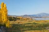 Alpine-Way;Australia;autuminal;autumn;autumn-colour;autumn-colours;autumnal;color;colors;colour;colours;dam;dams;deciduous;fall;Khancoban;Khancoban-Dam;Khancoban-Pondage;Khancoban-Reservoir;lake;lakes;leaf;leaves;N.S.W.;New-South-Wales;NSW;pondage;poplar;poplar-tree;poplar-trees;poplars;reservoir;reservoirs;season;seasonal;seasons;Snowy-Mountains;Snowy-Mountains-Drive;South-New-South-Wales;Southern-New-South-Wales;tree;trees