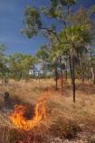alight;Australia;Australian;burn;burned;burning;burnoff;burnoffs;burns;burnt;bush-fire;bush-fires;danger;dangerous;destruction;fire;fires;flamable;flame;flames;flaming;forest-fire;forest-fires;Gagadju;grass-fire;grass-fires;heat;hot;Kakadu;Kakadu-N.P.;Kakadu-National-Park;Kakadu-NP;N.T.;Northern-Territory;NT;on-fire;orange;Top-End;UN-world-heritage-area;UN-world-heritage-site;UNESCO-World-Heritage-area;UNESCO-World-Heritage-Site;united-nations-world-heritage-area;united-nations-world-heritage-site;wild-fire;wild-fires;wildfire;wildfires;world-heritage;world-heritage-area;world-heritage-areas;World-Heritage-Park;World-Heritage-site;World-Heritage-Sites