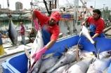 food;markets;market;fish;fishing;sell;sale;fishy;orange;prymont;blackwattle;bay-;fisherman;fishermen;fisher;yellow;fin;tuna;fishing;yellowfin;yellow_fin-
