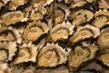 australia;sydney;prawn;shrimp;shrimps;seafood;sea;food;markets;market;fish;fishing;sell;sale;fishy;orange;prymont;blackwattle;bay-;shell;shells;oyster