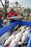 australia;sydney;prawn;shrimp;shrimps;seafood;sea;food;markets;market;fish;fishing;sell;sale;fishy;orange;prymont;blackwattle;bay-;fisherman;fishermen;fisher;yellow;fin;tuna;fishing;yellowfin;yellow_fin-
