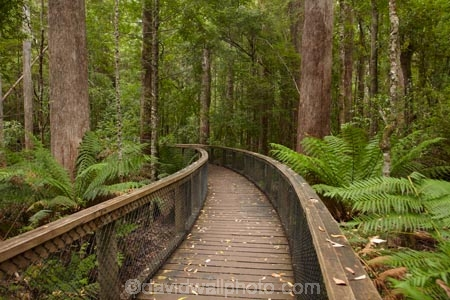 Australasian;Australia;Australian;beautiful;beauty;bush;endemic;fern;ferns;forest;forests;frond;fronds;green;Hastings-Caves-State-Reserve;Island-of-Tasmania;lush;native;native-bush;natural;nature;scene;scenic;State-of-Tasmania;Tas;Tasmania;tree;trees;wood;woods