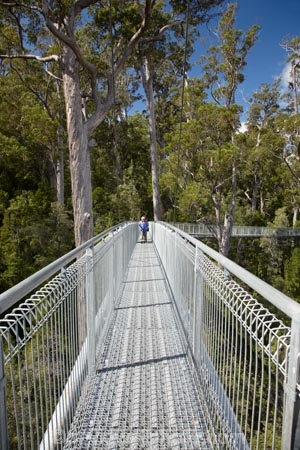 Australasian;Australia;Australian;beautiful;beauty;bush;elevated-walkway;elevated-walkways;endemic;forest;Forestry-Tasmania;forests;green;high;Island-of-Tasmania;native;native-bush;natural;nature;people;person;scene;scenic;State-of-Tasmania;Tahune-Air-Walk;Tahune-AirWalk;Tahune-Forest-Airwalk;Tahune-Forest-Reserve;Tahure-Forest-Air-Walk;Tas;Tasmania;tourism;tourist;tourists;tree;trees;wood;woods