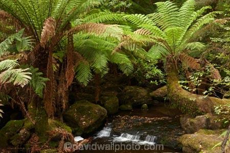 Australasian;Australia;Australian;brook;brooks;cascade;cascades;creek;creeks;Derwent-Valley;falls;fern;ferns;flora;flow;forest;forestry;forests;frond;fronds;green;Island-of-Tasmania;lush;Mount-Field-N.P.;Mount-Field-National-Park;Mount-Field-NP;Mt-Field-N.P.;Mt-Field-National-Park;Mt-Field-NP;native-bush;natural;nature;outdoor;outdoors;Russell-Falls;scene;scenic;State-of-Tasmania;stream;streams;Tas;Tasmania;undergrowth;water;water-fall;water-falls;watercourse;waterfall;waterfalls;wet