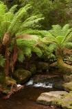 Australasian;Australia;Australian;brook;brooks;cascade;cascades;creek;creeks;Derwent-Valley;falls;fern;ferns;flora;flow;forest;forestry;forests;frond;fronds;green;Island-of-Tasmania;lush;Mount-Field-N.P.;Mount-Field-National-Park;Mount-Field-NP;Mt-Field-N.P.;Mt-Field-National-Park;Mt-Field-NP;native-bush;natural;nature;outdoor;outdoors;scene;scenic;State-of-Tasmania;stream;streams;Tas;Tasmania;undergrowth;water;water-fall;water-falls;watercourse;waterfall;waterfalls;wet