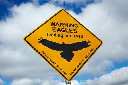 Australasian;Australia;Australian;eagle;eagle-sign;eagle-signs;eagle-warning-sign;eagle-warning-signs;eagles;eagles-feeding-on-road;eagles-sign;eagles-signs;eagles-warning-sign;eagles-warning-signs;Island-of-Tasmania;Northern-Tasmania;road-sign;road-signs;road_sign;road_signs;roads;roadsign;roadsigns;sign;signs;State-of-Tasmania;symbol;symbols;Tas;Tasmania;The-North;warn;warning;warning-sign;warning-signs;wildlife;wildlife-sign;wildlife-signs;wildlife-warning-sign;wildlife-warning-signs;yellow-black;yellow-sign;yellow-signs