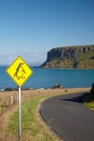 Australasian;Australia;Australian;Bass-Strait;Circular-Head;headland;headlands;Island-of-Tasmania;lava-neck;lava-necks;North-Western-Tasmania;North-WestTasmania;Northern-Tasmania;Northwestern-Tasmania;NorthwestTasmania;penguiin;penguins;Penquin-Sign;Penquin-Signs;Penquin-Warning-Sign;promontories;promontory;road-sign;road-signs;sign;signs;Stanley;Stanley-Peninsula;State-of-Tasmania;Tas;Tasmania;The-North;The-Nut;volcanic-neck;volcanic-necks;volcanic-plug;volcanic-plugs;warning-sign;warning-signs;wildlife;wildlife-sign;wildlife-signs