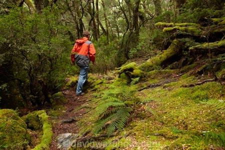 Australasian;Australia;Australian;beautiful;beauty;bush;Cradle-Mountain-_-Lake-St-Clair-National-Park;Cradle-Mt-_-Lake-St-Clair-National-Park;Enchanted-Walk;endemic;forest;forests;green;hike;hiker;hikers;hiking;hiking-track;hiking-tracks;Island-of-Tasmania;lush;moss;mossy;native;native-bush;natural;nature;Pencil-Pine-Track;scene;scenic;State-of-Tasmania;Tas;Tasmania;The-Enchanted-Walk;The-West;tramp;tramper;trampers;tramping;tramping-tack;tramping-tracks;tree;trees;trek;treker;trekers;treking;trekker;trekkers;trekking;verdant;walk;walker;walkers;walking;walking-track;walking-tracks;West-Tasmania;Western-Tasmania;wood;woods