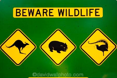australasia;australia;australian;beware-wildlife;bird;birds;kangaroo;Kangaroo-Warning-Sign;kangaroos;Lasiorhinus-latrifrons;lyre-bird;lyre-birds;lyre_bird;lyre_birds;lyrebird;lyrebirds;mount-buffalo-n.p.;mount-buffalo-national-park;mount-buffalo-np;mt-buffalo-n.p.;mt-buffalo-national-park;mt-buffalo-np;mt.-buffalo-n.p.;mt.-buffalo-national-park;mt.-buffalo-np;natural;nature;Road;road-sign;road-signs;road_sign;road_signs;roads;roadsign;roadsigns;sign;signs;symbol;symbols;tranportation;transport;travel;victoria;warn;warning;wildlife;wombat;wombats;yellow-black