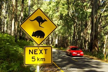australasia;australia;australian;automobile;automobiles;bend;bends;car;cars;centre-line;centre-lines;centre_line;centre_lines;centreline;centrelines;corner;corners;driving;highway;highways;kangaroo;Kangaroo-Warning-Sign;kangaroos;Lasiorhinus-latrifrons;mount-buffalo-n.p.;mount-buffalo-national-park;mount-buffalo-np;mt-buffalo-n.p.;mt-buffalo-national-park;mt-buffalo-np;mt.-buffalo-n.p.;mt.-buffalo-national-park;mt.-buffalo-np;natural;nature;next-5-km;next-five-kilometres;open-road;open-roads;Road;road-sign;road-signs;road-trip;road_sign;road_signs;roads;roadsign;roadsigns;sign;signs;straight;symbol;symbols;tranportation;transport;transportation;travel;traveling;travelling;trip;trips;vehicle;vehicles;victoria;warn;warning;wildlife;wombat;wombats;yellow-black