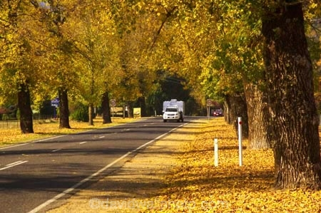 4wd;4wds;4wds;4x4;4x4s;4x4s;australasia;Australia;australian;autumn;autumn-colour;autumn-colours;autumnal;autumninal;avenue;avenues;boulevard;boulevards;Bright;camper;campers;caravan;caravans;centre-line;centre-lines;centre_line;centre_lines;centreline;centrelines;color;colors;colour;colours;deciduous;driving;fall;fall-color;fall-colors;foliage;four-by-four;four-by-fours;four-wheel-drive;four-wheel-drives;highway;highways;holiday;holidays;leaf;leaves;open-road;open-roads;road;road-trip;roads;straight;suv;suvs;tour;touring;tourism;tourist;tourists;trailer;transport;transportation;travel;traveler;travelers;traveling;traveller;travellers;travelling;tree;trees;trip;vacation;vacations;vehicle;vehicles;Victoria
