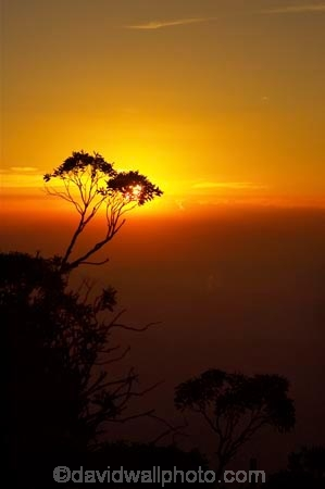 Alpine-National-Park;alps;australasia;australia;australian;australian-alps;break-of-day;dawn;dawning;daybreak;dusk;eucalypt;eucalypts;eucalyptus;eucalytis;evening;first-light;gum;gum-tree;gum-trees;gums;high-country;morning;mount-hotham;mountain;mountains;mt-hotham;mt.-hotham;nightfall;orange;silhouette;silhouettes;sky;sunrise;sunrises;sunset;sunsets;sunup;tree;trees;twilight;victoria;victorian-alps