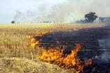 agricultural;agriculture;ash;australasia;Australia;australian;burn;burn-off;burn-offs;burn_off;burn_offs;burned;burning;burns;burnt;country;countryside;crop;crops;cultivation;farm;farming;farmland;farms;field;fields;fire;fires;flame;flames;grass_fire;grass_fires;grassfire;grassfires;heat;horticulture;hot;meadow;meadows;paddock;paddocks;pasture;pastures;polute;polutes;polution;rural;smoke;smokey;Stubble-Burnoff;Victoria;Wangaratta