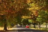 australasia;Australia;australian;automobile;automobiles;autumn;autumn-colour;autumn-colours;autumnal;autumninal;avenue;avenues;boulevard;boulevards;Bright;car;cars;centre-line;centre-lines;centre_line;centre_lines;centreline;centrelines;color;colors;colour;colours;deciduous;driving;fall;fall-color;fall-colors;foliage;highway;highways;leaf;leaves;open-road;open-roads;Road;road-trip;roads;straight;tranportation;transport;transportation;travel;traveling;travelling;tree;trees;trip;trips;ute;utes;vehicle;vehicles;Victoria