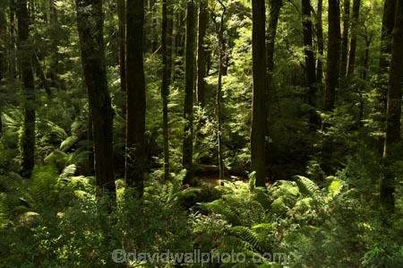 aerial-walkway;aerials-walkways;australasia;Australia;australian;bush;canopy;canopy-walk;eco-tourism;ecotourism;eucalyptis;eucalypts;fern;ferns;forest;forests;great-ocean-road;gum;gums;lush;luxuriant;native-bush;native-forest;native-forests;natural;nature;Otway-Fly;otway-range;Otway-Ranges;plant;plants;rain-forest;rain-forests;rain_forests;rainforest;rainforest-canopy;rainforest-walk;rainforests;tourism;travel;tree;Tree-Top-Walk;trees;vegetation;verdant;Victoria;walkway;walkways