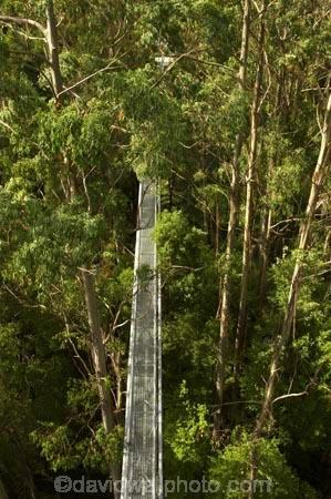 aerial-walkway;aerials-walkways;australasia;Australia;australian;bridge;bridges;bush;canopy;canopy-walk;ecotourism;engineering;eucalyptis;eucalypts;forest;forest-canopy;forests;galvanised;galvanized;great-ocean-road;gum;gums;high;high-up;lush;luxuriant;metal;native-bush;native-forest;native-forests;natural;nature;Otway-Fly;otway-range;Otway-Ranges;plant;plants;rain-forest;rain-forests;rain_forests;rainforest;rainforest-canopy;rainforest-walk;rainforests;steel;structure;structures;tree;Tree-Top-Walk;tree-trunk;tree-trunks;trees;vegetation;verdant;vertigo;Victoria;walkway;walkways