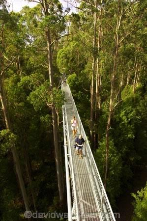 aerial-walkway;aerials-walkways;australasia;Australia;australian;bridge;bridges;bush;canopy;canopy-walk;eco-tourism;eco-tourist;eco-tourists;ecotourism;ecotourist;ecotourists;engineering;eucalyptis;eucalypts;forest;forest-canopy;forests;galvanised;galvanized;great-ocean-road;gum;gums;high;high-up;lush;luxuriant;metal;native-bush;native-forest;native-forests;natural;nature;Otway-Fly;otway-range;Otway-Ranges;people;person;plant;plants;rain-forest;rain-forests;rain_forests;rainforest;rainforest-canopy;rainforest-walk;rainforests;steel;structure;structures;tourism;tourist;tourists;travel;tree;Tree-Top-Walk;tree-trunk;tree-trunks;trees;vegetation;verdant;vertigo;Victoria;walkway;walkways
