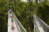 aerial-walkway;aerials-walkways;australasia;Australia;australian;bridge;bridges;bush;canopy;canopy-walk;eco-tourism;eco-tourist;eco-tourists;ecotourism;ecotourist;ecotourists;engineering;eucalyptis;eucalypts;forest;forest-canopy;forests;galvanised;galvanized;great-ocean-road;gum;gums;high;high-up;lush;luxuriant;metal;native-bush;native-forest;native-forests;natural;nature;Otway-Fly;otway-range;Otway-Ranges;people;person;plant;plants;rain-forest;rain-forests;rain_forests;rainforest;rainforest-canopy;rainforest-walk;rainforests;steel;structure;structures;tourism;tourist;tourists;travel;tree;Tree-Top-Walk;trees;vegetation;verdant;vertigo;Victoria;walkway;walkways