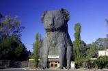 australasia;australia;australian;big-koala;big-koalas;dadswells-bridge;dadswells-bridge;enormous-koala;giant-koala;horsham;koala;koalas;stawell;tourism;victoria;western-highway
