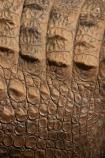 australia;australian;Close-Up;close-ups;close_up;close_ups;Crocodile;crocodiles;detail;details;nature;pattern;patterns;queensland;Reptile;reptiles;scale;scales;skin;wild;Wildlife