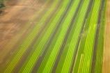 aerial;aerial-photo;aerial-photograph;aerial-photographs;aerial-photography;aerial-photos;aerial-view;aerial-views;aerials;agricultural;agriculture;Auckland;brown;commercial-produce-garden;country;countryside;crop;crops;farm;farming;farmland;farms;field;fields;garden;gardens;green;horticulture;market-garden;market-gardens;N.I.;N.Z.;New-Zealand;NI;North-Is;North-Is.;North-island;Nth-Is;NZ;produce;row;rows;rural;season;seasonal;seasons;spring;springtime;vegetable-garden;vegetable-gardens;vegetable-growing;vegetables