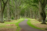Auckland;Avenue;Avenues;Cornwall-Park;footpath;footpaths;N.I.;N.Z.;New-Zealand;NI;North-Island;NZ;Oak;Oak-tree;Oak-trees;Oaks;One-Tree-Hill;sidewalk;sidewalks;tree-trunk;tree-trunks;trunk;trunks;Twin-Oaks-Drive;walkway;walkways