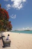 Auckland;beach;beaches;coast;coastal;coastline;flower;flowers;metrosideros-excelsa;Mission-Bay;Mission-Bay-Beach;N.I.;N.Z.;native;native-plant;native-plants;New-Zealand;NI;North-Is;North-Is.;North-Island;NZ;ocean;oceans;plant;plants;pohutakawa;pohutakawas;pohutukawa;pohutukawa-flower;pohutukawa-flowers;pohutukawa-tree;pohutukawa-trees;pohutukawas;sand;sandy;sea;seas;shore;shoreline;summer;surf;tree;trees