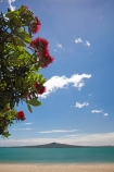 Auckland;beach;beaches;coast;coastal;coastline;flower;flowers;metrosideros-excelsa;Mission-Bay;Mission-Bay-Beach;N.I.;N.Z.;native;native-plant;native-plants;New-Zealand;NI;North-Is;North-Is.;North-Island;NZ;ocean;oceans;plant;plants;pohutakawa;pohutakawas;pohutukawa;pohutukawa-flower;pohutukawa-flowers;pohutukawa-tree;pohutukawa-trees;pohutukawas;Rangitoto-Is;Rangitoto-Island;sand;sandy;sea;seas;shore;shoreline;summer;surf;tree;trees
