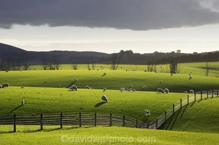 agricultural;agriculture;clinton;cloud;clouds;country;countryside;farm;farming;farmland;farms;fence;fence-line;fence-lines;fence_line;fence_lines;fenceline;fencelines;fences;fibre;field;fields;grass;grassy;green;horticulture;lamb;lush;meadow;meadows;new-zealand;paddock;paddocks;pasture;pastures;rural;sheep;south-island;south-otago;verdant;wool;woolly;wooly