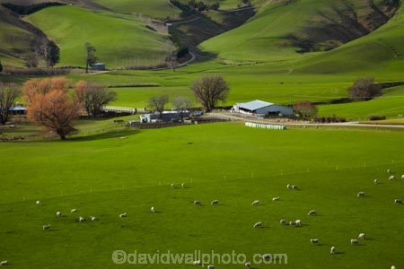 agricultural;agriculture;animal;animals;Clutha-District;country;countryside;farm;Farm-Building;Farm-Buildings;Farm-Shed;Farm-Sheds;farming;farmland;farms;field;fields;grass;grassy;green;green-grass;livestock;mammal;mammals;meadow;meadows;N.Z.;New-Zealand;Otago;paddock;paddocks;pasture;pastures;rural;S.I.;Shearing-Shed;Shearing-Sheds;sheep;Sheep-Shed;Sheep-Sheds;SI;South-Is;South-Island;South-Otago;Sth-Is;stock;Waitahuna;Wool-Shed;Wool-Sheds;woolshed;woolsheds
