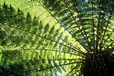 canopy;fern;forest;frond;fronds;green;icon;icons;native;nature;new-zealand;radiate;Southern-Scenic-Route;symbol;symbols