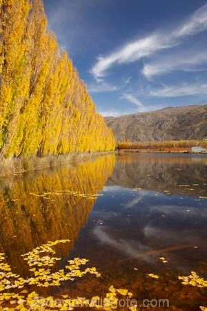 autuminal;autumn;autumn-colour;autumn-colours;autumnal;calm;Carrick-Range;Central-Otago;color;colors;colour;colours;Cromwell;dam;dams;deciduous;fall;gold;golden;irrigation-dam;irrigation-dams;irrigation-pond;irrigation-ponds;leaf;leaves;Mount-Difficulty;Mt-Difficulty;Mt.-Difficulty;N.Z.;New-Zealand;NZ;orchard;orchards;Otago;placid;pond-ponds;poplar-tree;Poplar-trees;quiet;reflection;reflections;Ripponvale;row;rows;S.I.;season;seasonal;seasons;serene;SI;smooth;South-Is;South-Island;still;tranquil;tree;trees;water;yellow