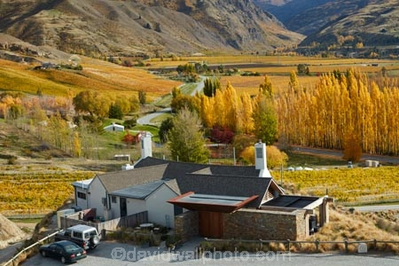 agricultural;agriculture;autuminal;autumn;autumn-colour;autumn-colours;autumnal;Bannockburn;bar;bars;cafe;cafes;Central-Otago;central-otago-vineyard;central-otago-vineyards;central-otago-wineries;central-otago-winery;color;colors;colour;colours;country;countryside;crop;crops;cuisine;cultivation;deciduous;dine;dining;fall;farm;farming;farmland;farms;field;fields;food;gold;golden;grape;grapes;grapevine;horticulture;leaf;leaves;Mt-Difficulty;Mt-Difficulty-Cafe;Mt-Difficulty-Restaurant;Mt-Difficulty-Tasting-Room;Mt-Difficulty-Vineyard;Mt-Difficulty-Winery;Mt-Difficulty-Wines;Mt-Difficulty-Wines-Tasting-Room;N.Z.;new-zealand;NZ;Otago;poplar;poplar-tree;poplar-trees;poplars;restaurant;restaurants;row;rows;rural;S.I.;season;seasonal;seasons;SI;South-Island;Sth-Is;Sth-Is.;The-Winery-Restaurant;tree;trees;vine;vines;vineyard;vineyards;vintage;wine;wineage;wineries;winery;wines;yellow