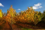 autuminal;autumn;autumn-colour;autumn-colours;autumnal;Central-Otago;color;colors;colour;colours;country;countryside;Cromwell;crop;crops;deciduous;fall;farm;farming;farmland;farms;field;fruit;fruit-tree;fruit-trees;horticulture;leaf;leaves;N.Z.;New-Zealand;NZ;orchard;orchards;Otago;Ripponvale;row;rows;rural;S.I.;season;seasonal;seasons;SI;South-Is;South-Island;Sth-Is;tree;trees