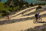 bicycle;bicycles;bike;bike-track;bike-tracks;bike-trail;bike-trails;bikes;Central-Otago;cycle;cycle-track;cycle-tracks;cycle-trail;cycle-trails;cycler;cyclers;cycles;cyclist;cyclists;families;family;hairpin-bend;hairpin-bends;hairpin-corner;hairpin-corners;lake;Lake-Roxburgh;lakes;mountain-bike;mountain-biker;mountain-bikers;mountain-bikes;mtn-bike;mtn-biker;mtn-bikers;mtn-bikes;N.Z.;New-Zealand;NZ;Otago;people;person;push-bike;push-bikes;push_bike;push_bikes;pushbike;pushbikes;Roxburgh;Roxburgh-Cycle-Track;Roxburgh-Cycle-Trail;Roxburgh-Gorge;Roxburgh-Gorge-Cycle-and-Walking-Trail;Roxburgh-Gorge-Cycle-Track;Roxburgh-Gorge-Cycle-Trail;Roxburgh-Gorge-Track;Roxburgh-Gorge-Trail;Roxburgh-Gorge-Walking-and-Cycle-Trail;S.I.;season;seasonal;seasons;SI;South-Is;South-Island;spring;spring-time;steep;Sth-is;switchback;switchback-road;switchback-roads;switchbacks;thyme;thyme-in-flower;tourism;tourist;tourists;violet;wild-thyme;zig-zag;zig-zag-road;zig-zag-roads;zig-zags;zig_zag;zig_zag-road;zig_zag-roads;zig_zags;zigzag;zigzag-road;zigzag-roads;zigzags