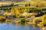 agricultural;agriculture;autuminal;autumn;Autumn-Colours;autumnal;Bannockburn-Inlet;boat;boats;cairnmuir-campground;cairnmuir-mountains;cairnmuir-range;campground;campgrounds;camping-ground;camping-grounds;Central-Otago;central-otago-vineyard;central-otago-vineyards;central-otago-wineries;central-otago-winery;color;colors;colour;colours;country;countryside;cromwell;crop;crops;cultivation;deciduous;fall;farm;farming;farmland;farms;field;fields;gold;golden;grape;grapes;grapevine;horticulture;kawarau-arm;lake;Lake-Dunstan;lakes;leaf;leaves;New-Zealand;poplar;poplar-tree;poplar-trees;poplars;row;rows;rural;south-island;speed-boat;speed-boats;tree;trees;vine;vines;vineyard;vineyards;vintage;water;wine;wineries;winery;wines;yellow