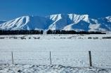 agricultural;agriculture;animal;animals;Aotearoa;Central-Otago;cold;Coldness;country;countryside;domestic-stock;ewes;Exterior;extreme-weather;farm;farm-animals;farming;farmland;farms;fence;fence-line;fence-lines;fence_line;fence_lines;fenceline;fencelines;fences;field;fields;flock;flocks;freeze;freezing;Hawkdun-Ra;Hawkdun-Range;herd;herds;high-country;hill;hills;Ida-Ra;Ida-Range;Ida-Valley;Idaburn;Landscape;Landscapes;livestock;mammal;mammals;Maniototo;meadow;meadows;mob;mobs;Mount-Ida;mountain;mountains;Mt-Ida;Mt.-Ida;N.Z.;natural;Nature;New-Zealand;NZ;Otago;Oturehua;outdoor;outdoors;Outside;paddock;paddocks;pasture;pastures;rural;S.I.;Scenic;Scenics;Season;Seasons;sheep;SI;snow;snowfall;snowy;snowy-hills;snowy-mountains;South-Is;South-Is.;South-Island;Sth-Is;stock;weather;white;winter;Wintertime;wintery;wintry