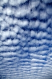 Aotearoa;autocumulus;autocumulus-undulatus;Bannockburn;blue;Central-Otago;cloud;clouds;cloudy;N.Z.;New-Zealand;NZ;Otago;ripple;ripple-cloud;rippled;ripples;S.I.;SI;skies;sky;South-Is;South-Island;Sth-Is;undulatus-cloud;undulatus-clouds;wave-cloud;weather