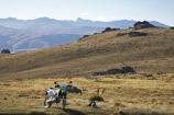 back-country;backcountry;Carrick-Range;Carrick-Town-Track;Carrick-Track;Carricktown-Track;Central-Otago;cross-country-bike;crosscountry-bike;dirt-bike;dirt-bikes;dirtbike;dirtbikes;duffers-saddle;Enduro-Bike;Enduro-Bikes;high-altitude;high-country;highcountry;highlands;kawasaki;Kawasaki-KLX400;KLX400;motor-bike;motor-bikes;motorbike;motorbikes;motorcycle;motorcycles;mountain;n.z.;new-zealand;nz;off-road;Otago;range;ranges;remote;remoteness;S.I.;SI;South-Island;trail-bike;trail-bikes;trailbike;trailbikes;tussock;tussock-grass;tussocks;uplands