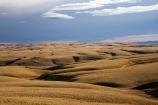 back-country;backcountry;Central-Otago;country;countryside;farm;farming;farmland;farms;field;fields;high-country;highcountry;highland;highlands;Lammermoor-Range;Lammermoor-Ranges;Maniototo;N.Z.;New-Zealand;NZ;Old-Dunstan-Road;Old-Dunstan-Track;Old-Dunstan-Trail;Otago;rural;S.I.;SI;South-Island;tussock;tussocks