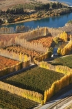 aerial;aerial-photo;aerial-photograph;aerial-photographs;aerial-photography;aerial-photos;aerial-view;aerial-views;aerials;autuminal;autumn;autumn-colour;autumn-colours;autumnal;Bannockburn;Central-Otago;color;colors;colour;colours;country;countryside;Cromwell;crop;crops;deciduous;fall;farm;farming;farmland;farms;field;fruit;fruit-tree;fruit-trees;horticulture;hydro-lake;hydro-lakes;lake;Lake-Dunstan;lakes;N.Z.;New-Zealand;NZ;orange;orchard;orchards;Otago;pattern;patterns;poplar;poplar-tree;poplar-trees;poplars;row;rows;rural;S.I.;season;seasonal;seasons;shape;shapes;SI;South-Is.;South-Island;tree;trees;water